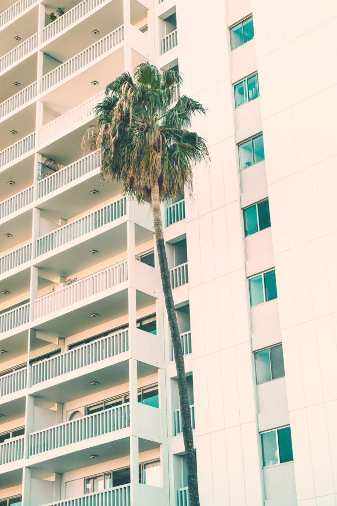 foto de habitaciones de un hotel con una palmera